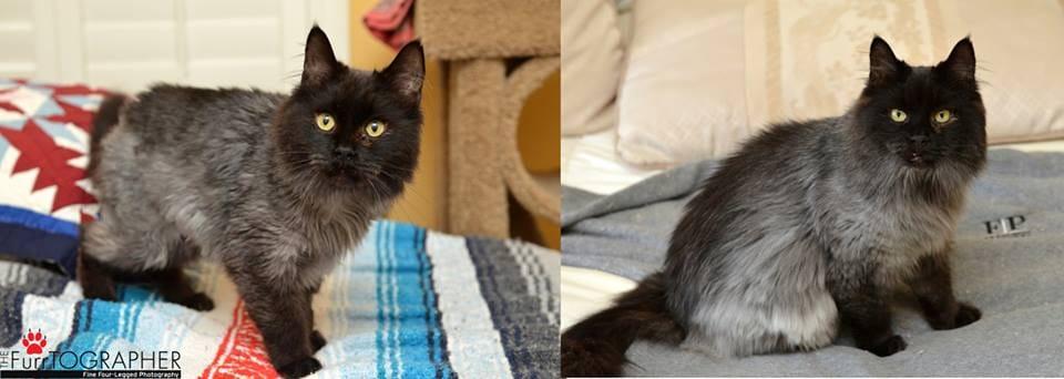 cat-jameson-fur-rescue-7