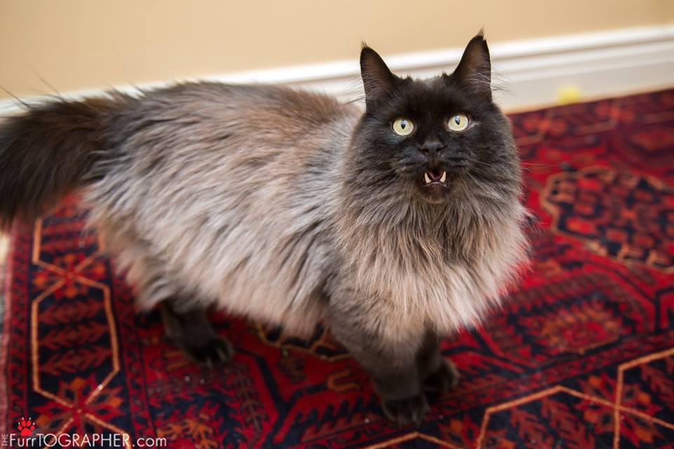 cat-jameson-fur-rescue-8