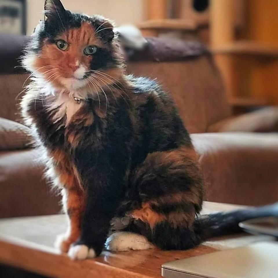 cat_ann_hoarding_4