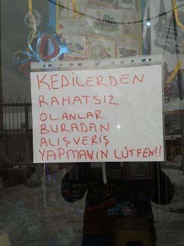 cat_istanbul_shop_winter_2