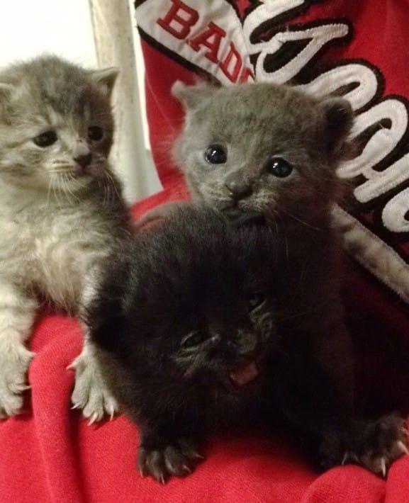 cats-rain-rescue-8