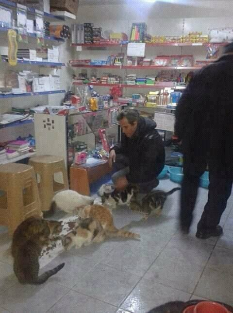 cats_istanbul_shop_winter_1