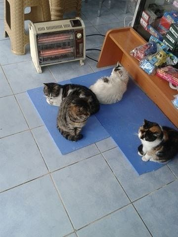 cats_istanbul_shop_winter_3