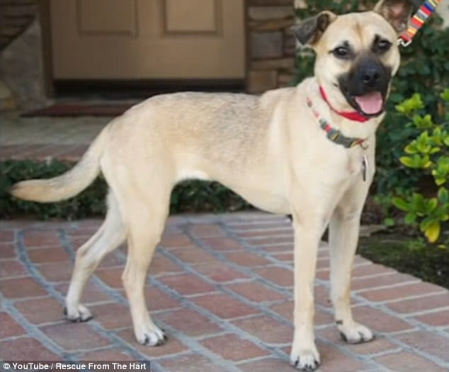 dog-angel-recovery-california-12