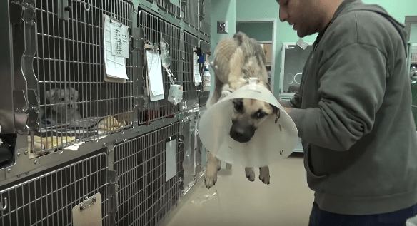 dog-angel-recovery-california-3
