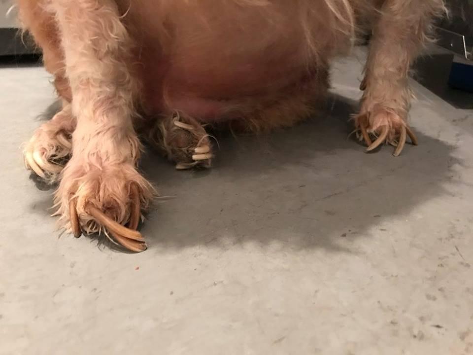 dog-evan-chicago-4