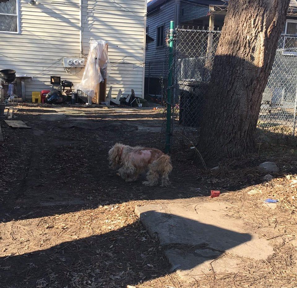 dog-evan-chicago-5