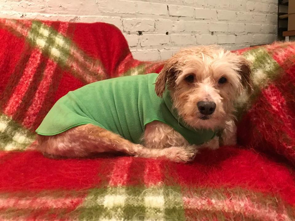 dog-evan-chicago-8