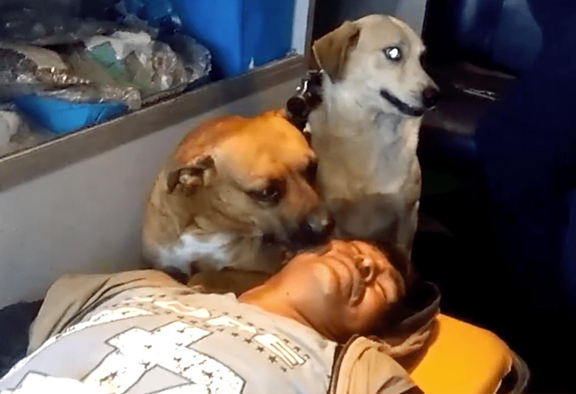 dog_ambulance_peru_1