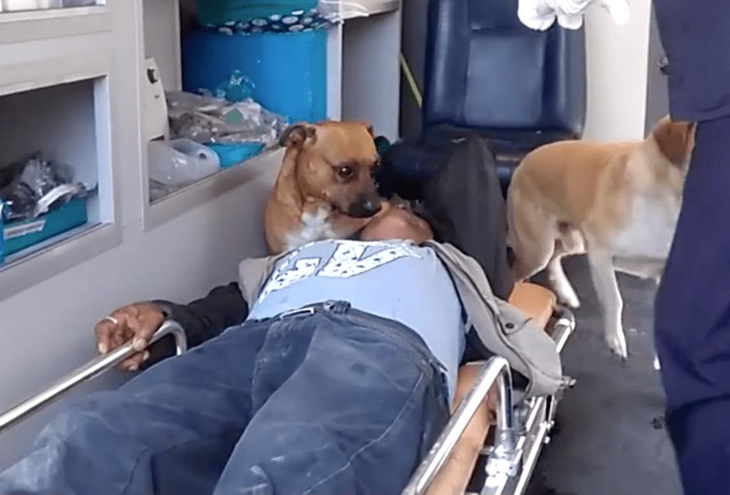 dog_ambulance_peru_2