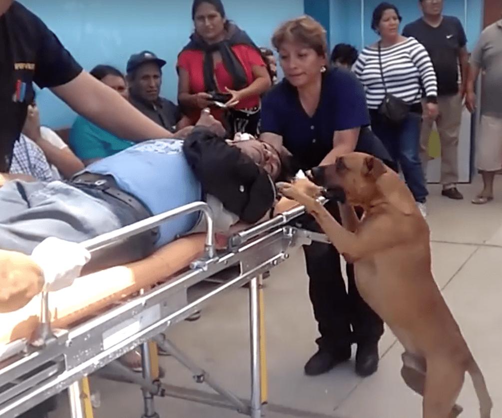 dog_ambulance_peru_4