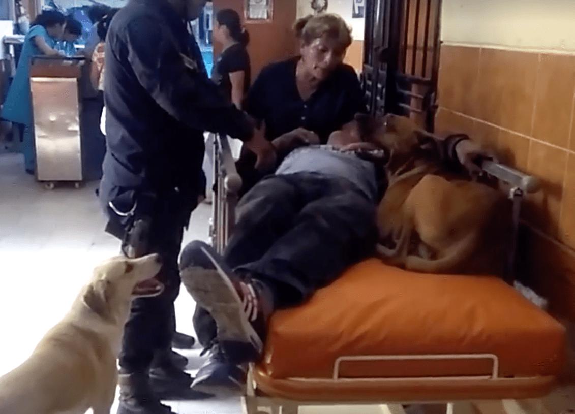 dog_ambulance_peru_5