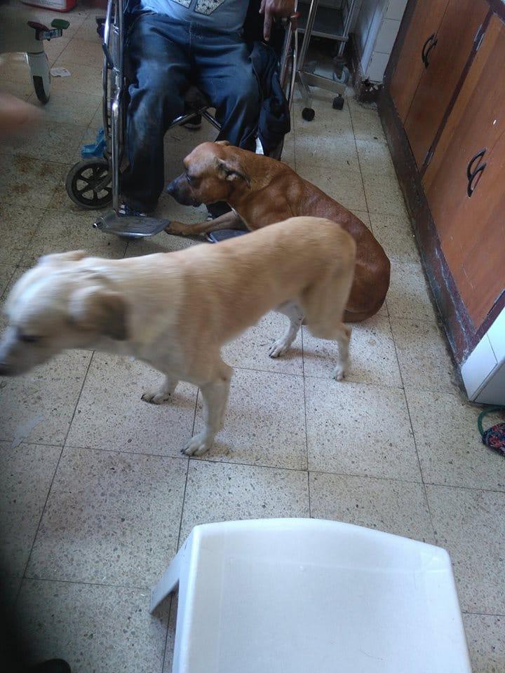 dog_ambulance_peru_6