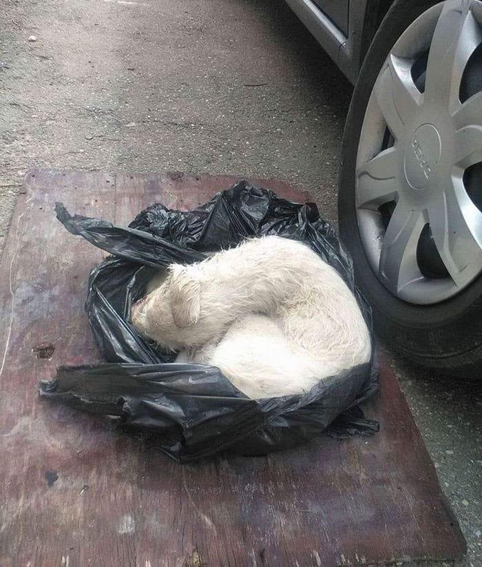 dog_anora_trashbag_rescue_2