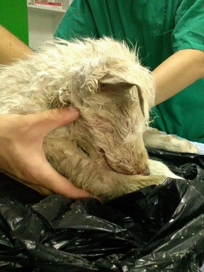 dog_anora_trashbag_rescue_3
