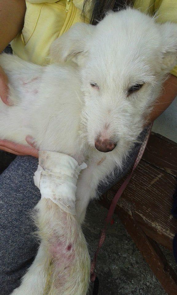 dog_anora_trashbag_rescue_4