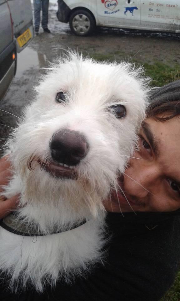 dog_anora_trashbag_rescue_5