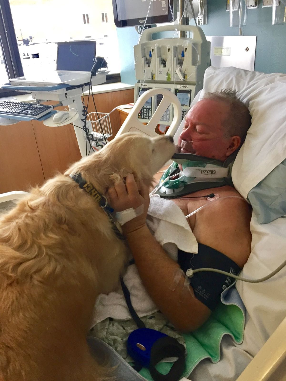 dog_kelsey_rescue_fall_1