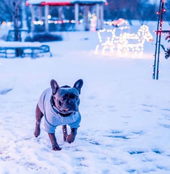 dog_tips_winter_3