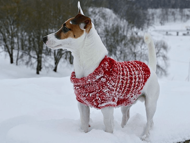 dog_tips_winter_4