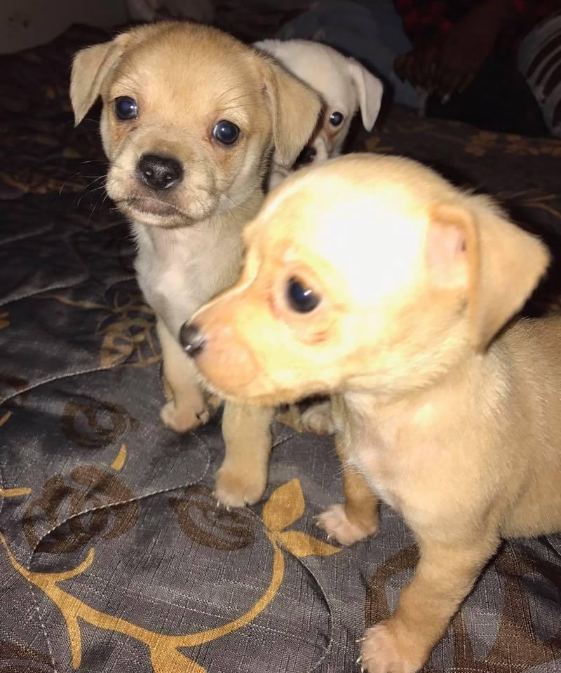 dogs_fire_rescue_washington_2