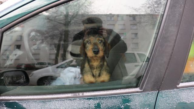 dogs_france_car_3