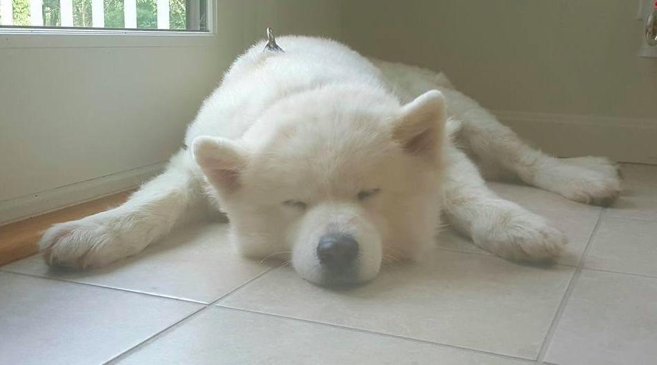 dogs_kenji_sophia_dog_meat_1