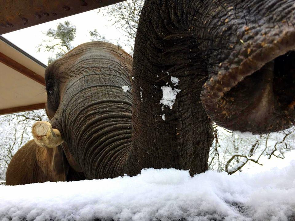 elephant-zoo-carwash-1