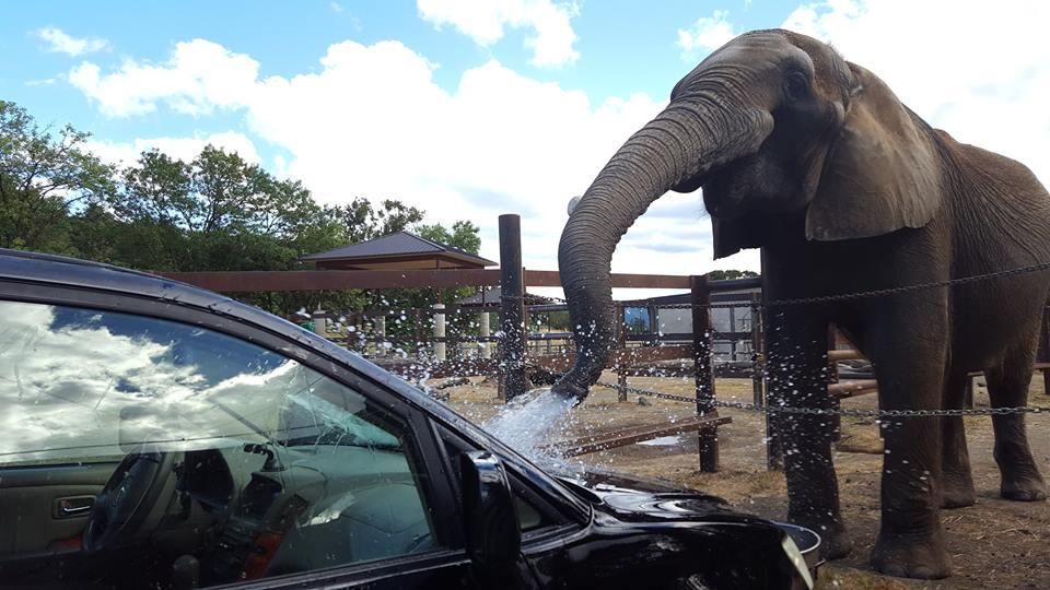 elephant-zoo-carwash-2