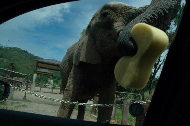 elephant-zoo-carwash-3