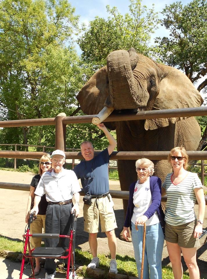 elephant-zoo-carwash-4