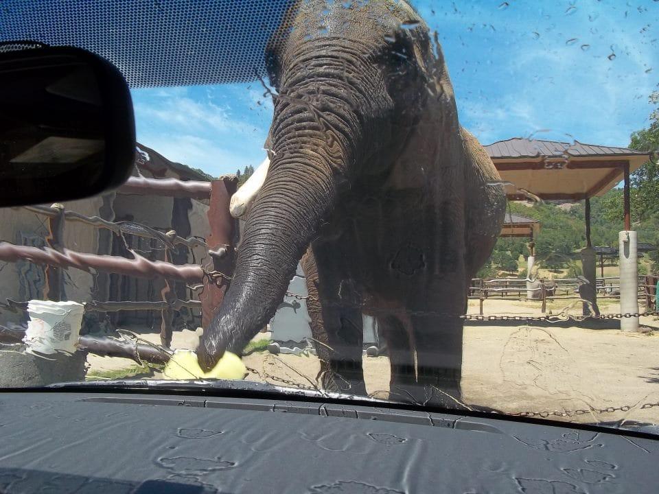 elephant-zoo-carwash-5