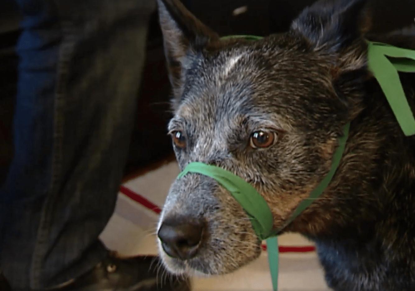 emergency_aid_dogs_2