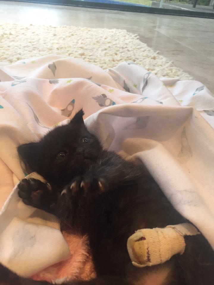 kitten-billy-rescue-1