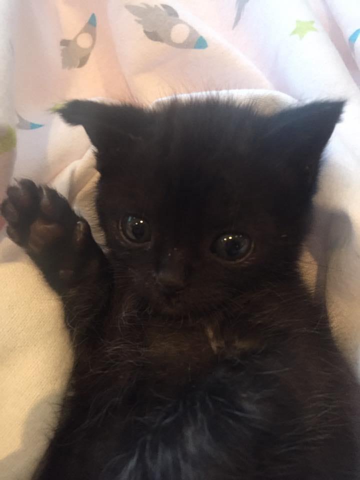 kitten-billy-rescue-2