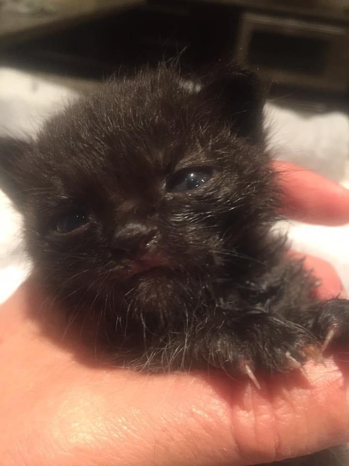 kitten-billy-rescue-7