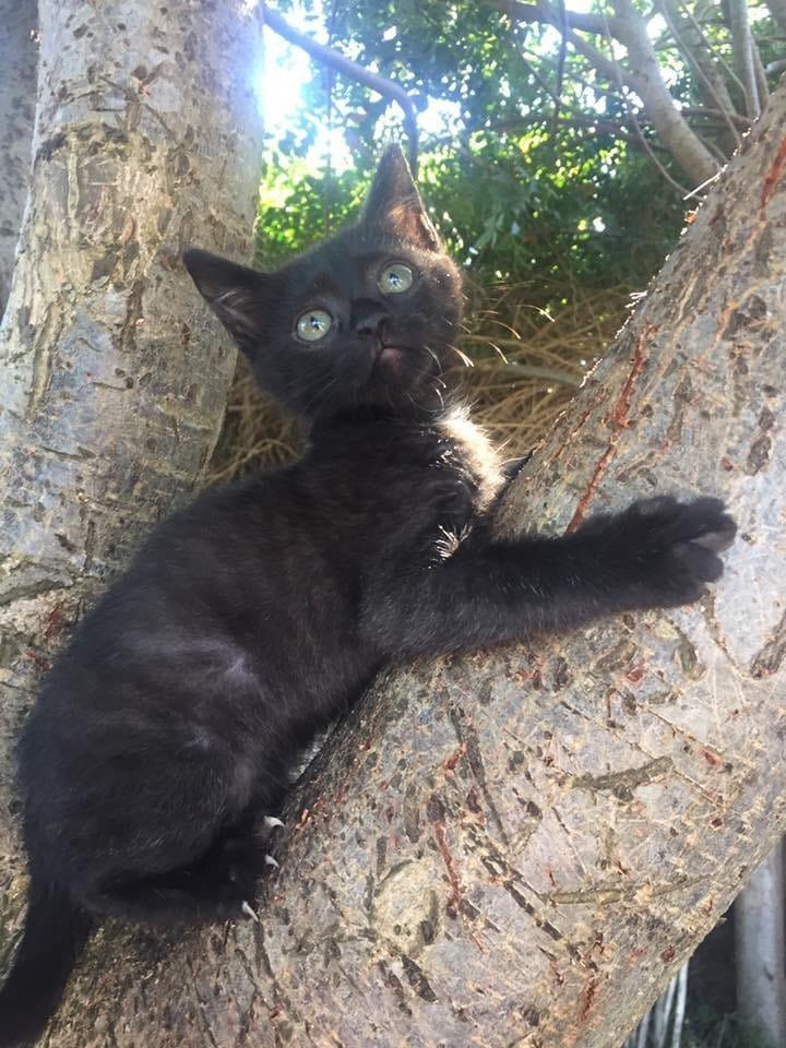 kitten-rescue-billy-4