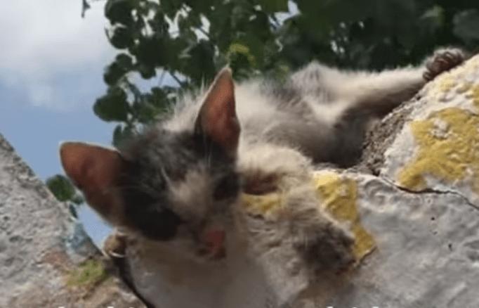 kitten_hetty_gutter_rescue_1