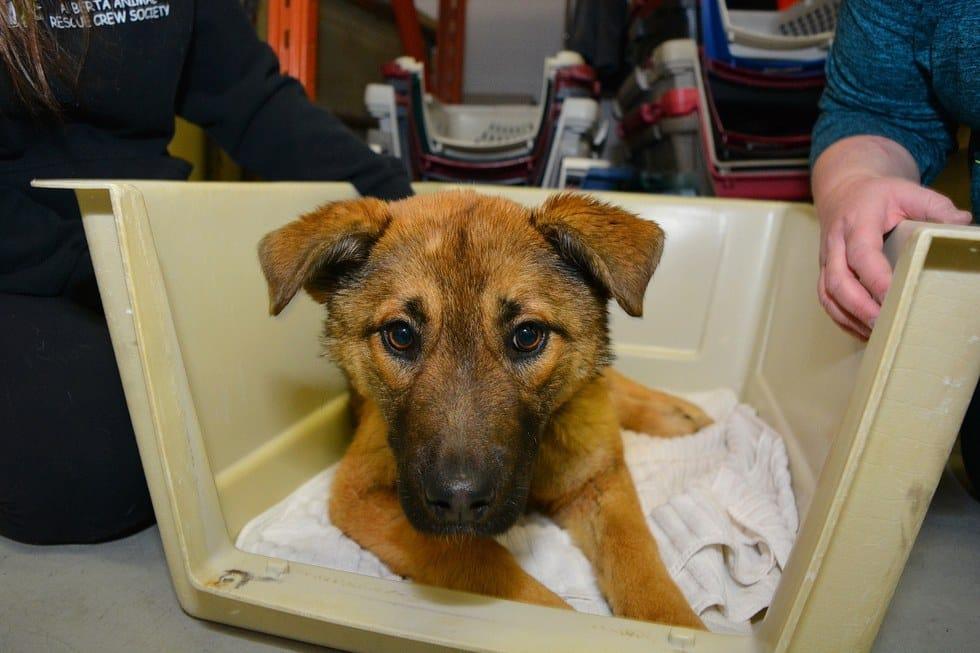 nutmeg_dog_car_rescue_2