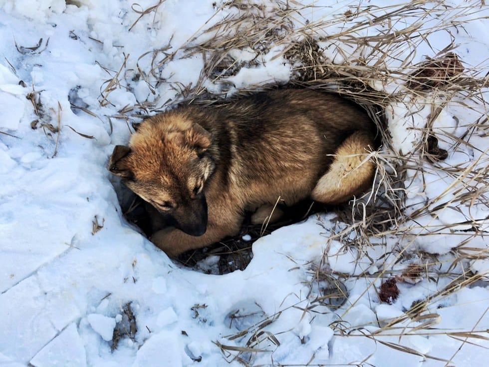 nutmeg_dog_car_rescue_4