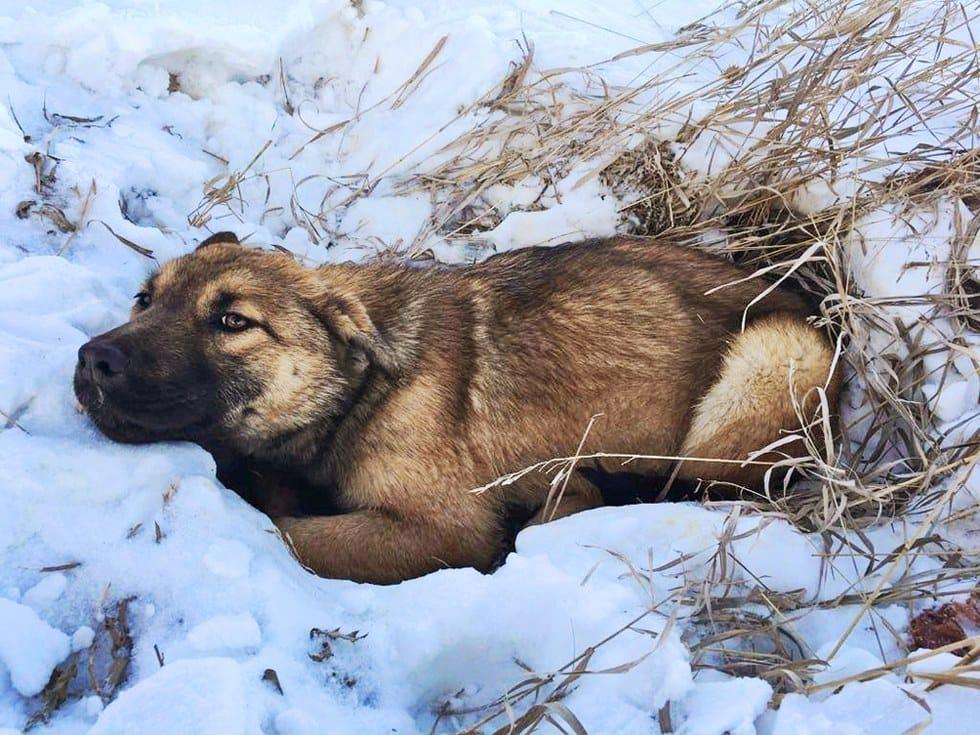 nutmet_dog_car_rescue_3