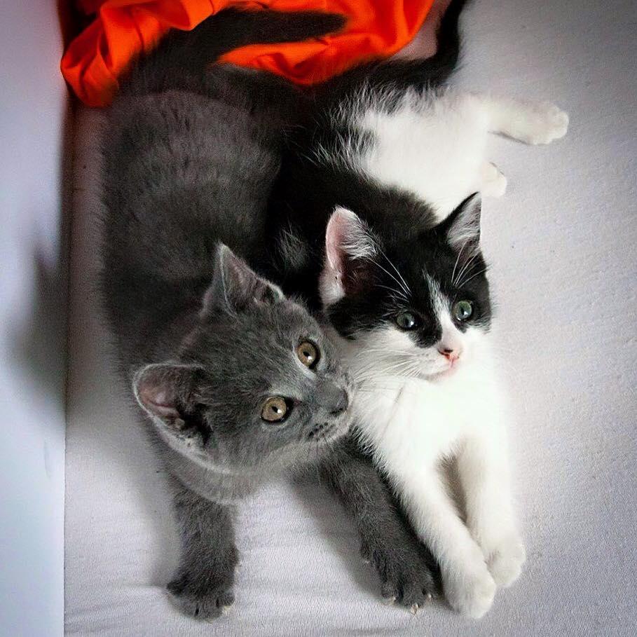 orhpan-kittens-canada-1