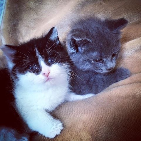 orhpan-kittens-canada-2