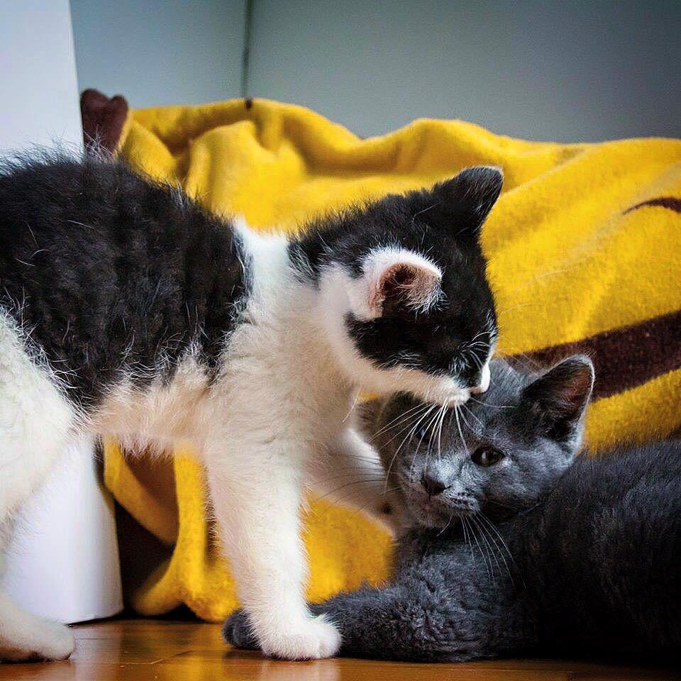 orphan-kittens-canada-3