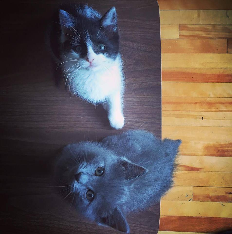 orphan-kittens-canada-4