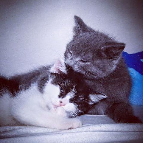 orphan-kittens-canada-6