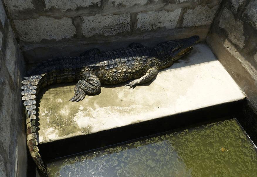 peta-crocodile-leather-1