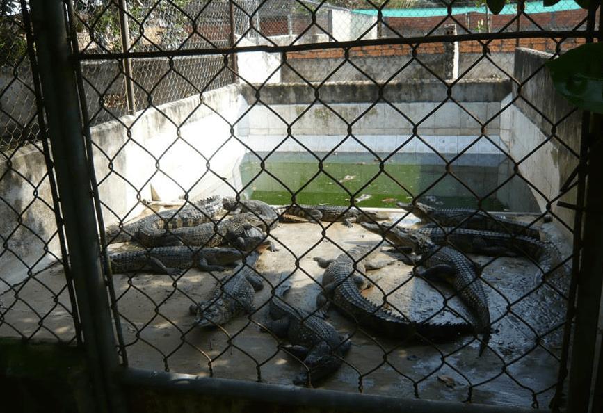 peta-crocodile-leather-3