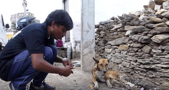 sidney-dog-india-2