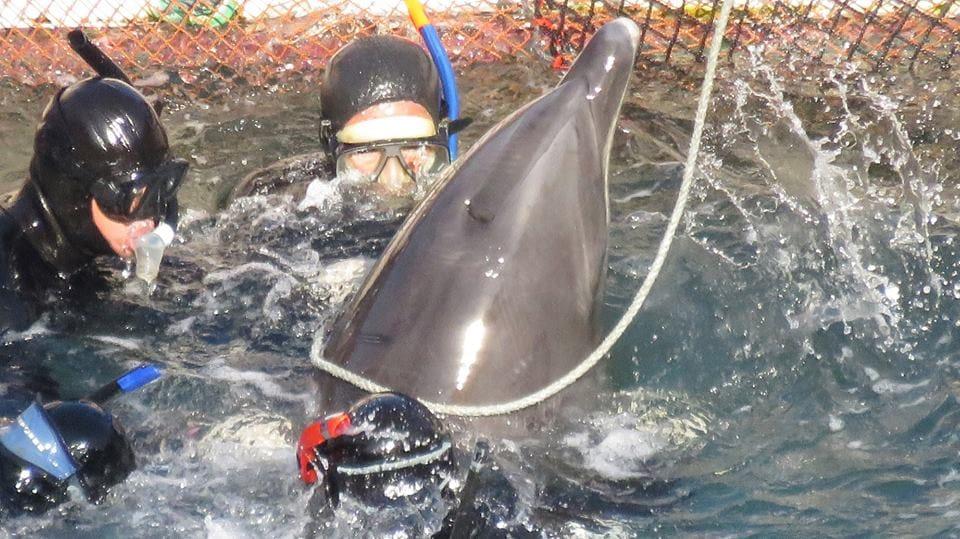 taiji_dolphins_baby_mom_1